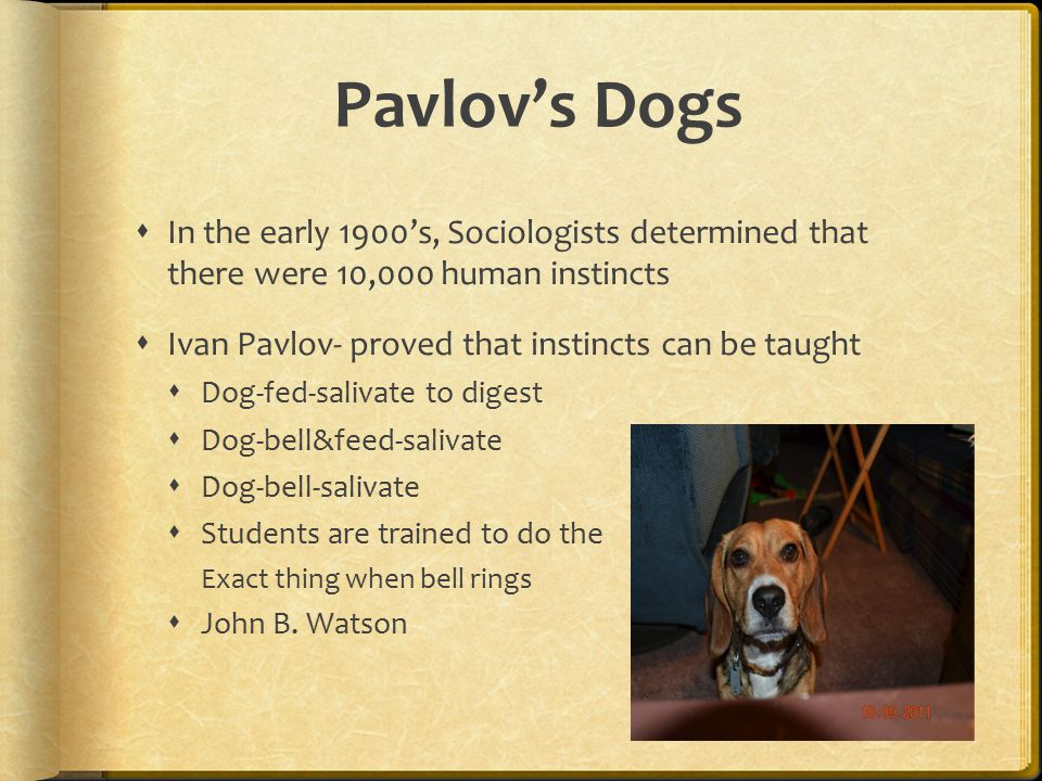 Pavlov's Dogs In the early 1900's, Sociologists determined that there were 10,000 human instincts.