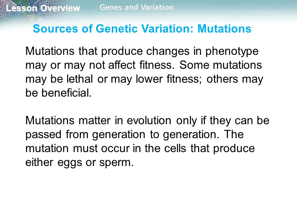 Sources of Genetic Variation: Mutations
