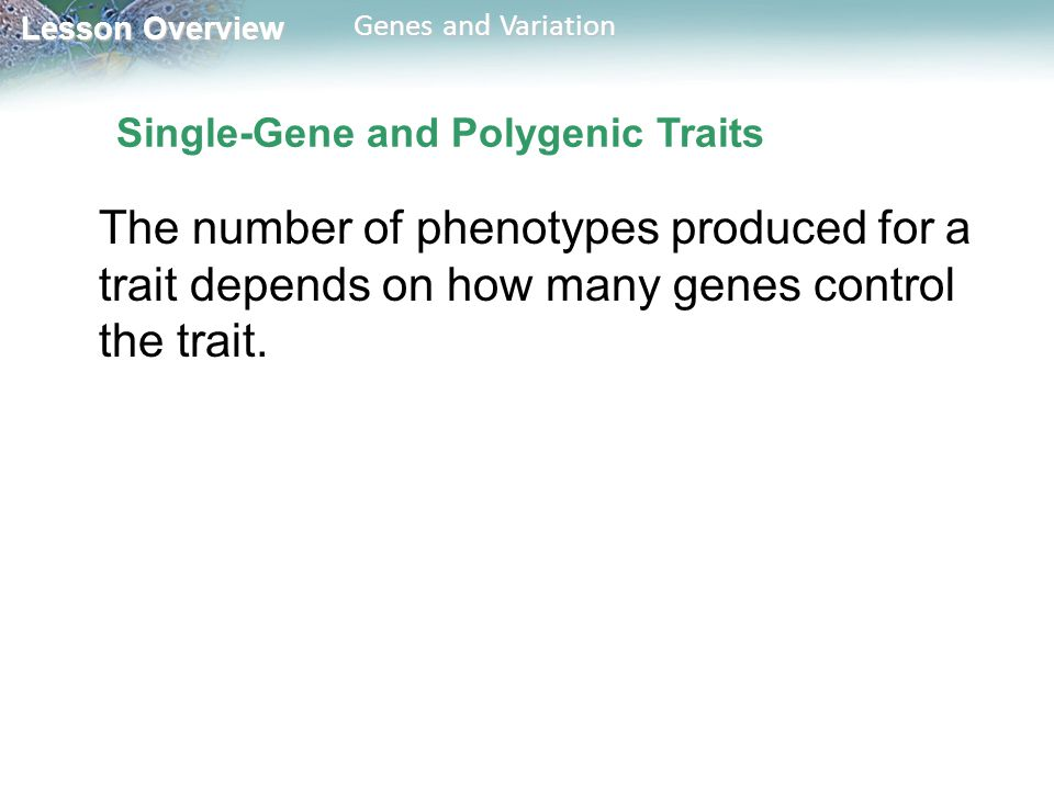 Single-Gene and Polygenic Traits