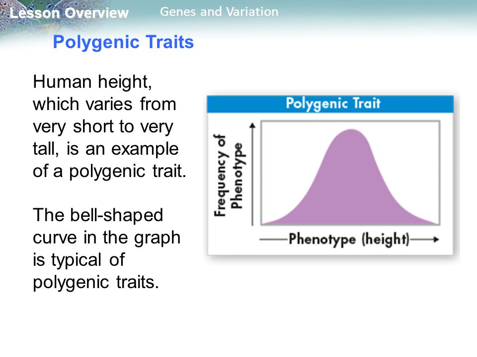 Polygenic Traits Human height, which varies from very short to very tall, is an example of a polygenic trait.