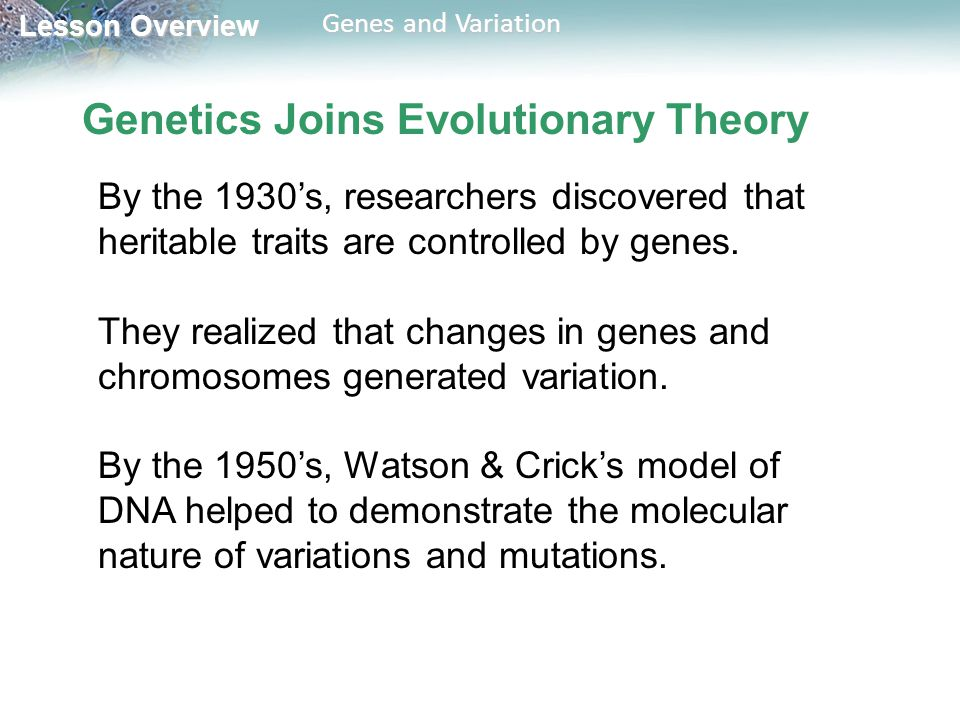 Genetics Joins Evolutionary Theory