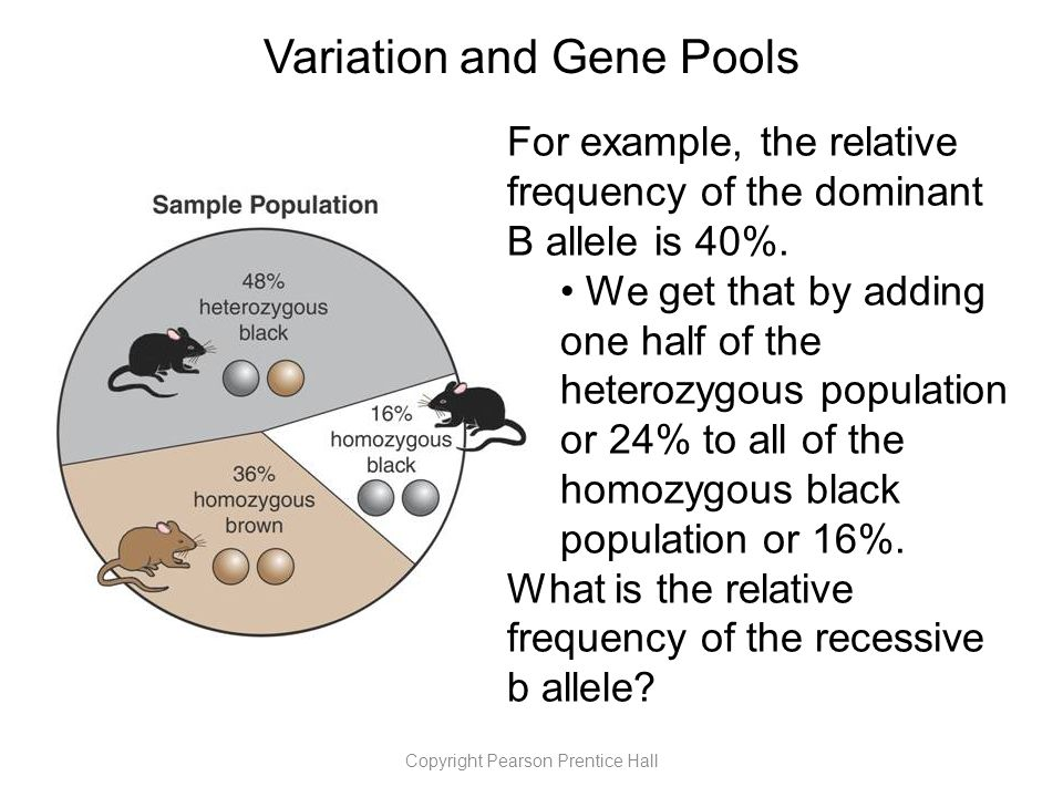 Variation and Gene Pools