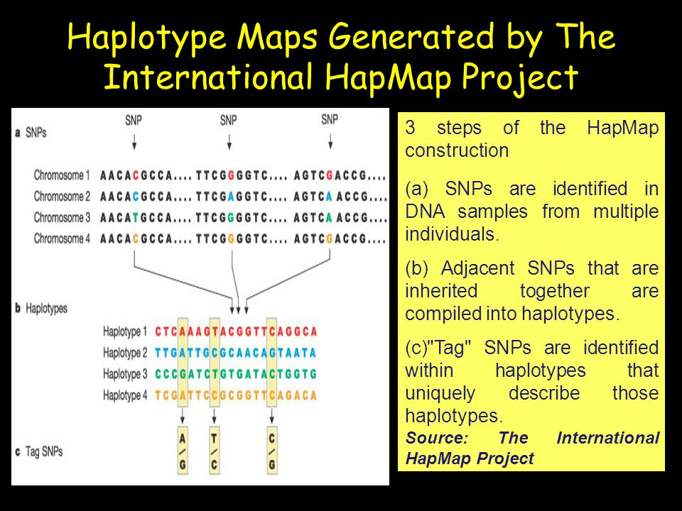 Haplotype Maps Generated by The International HapMap Project