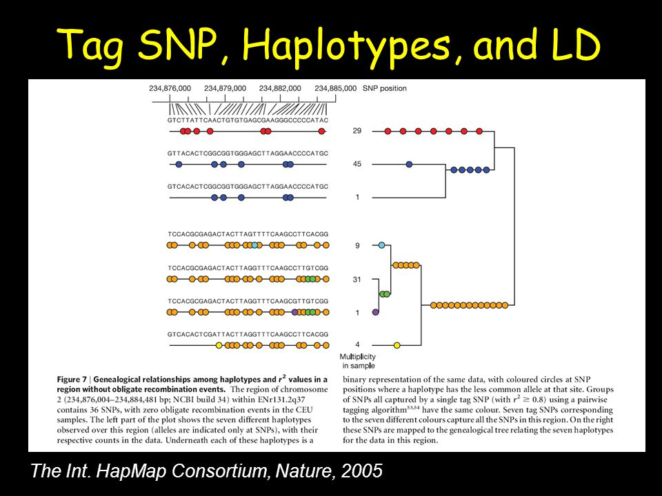 Tag SNP, Haplotypes, and LD