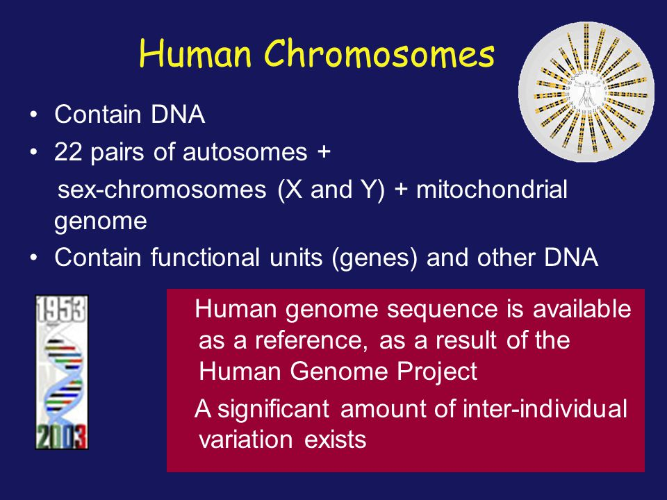 Human Chromosomes Contain DNA 22 pairs of autosomes +