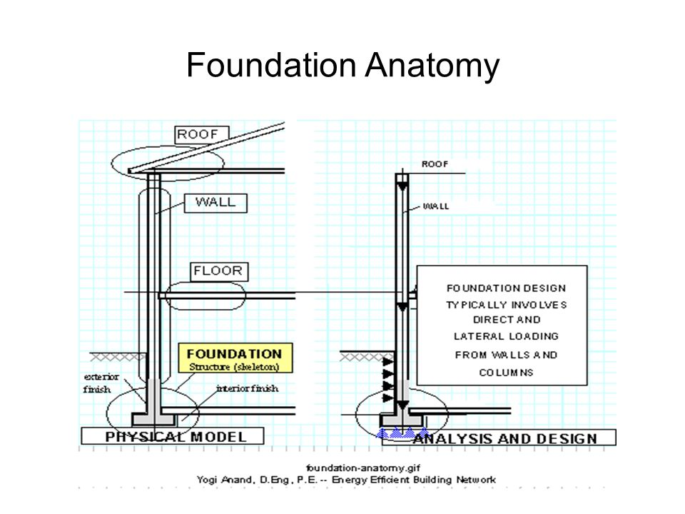 Foundation Anatomy
