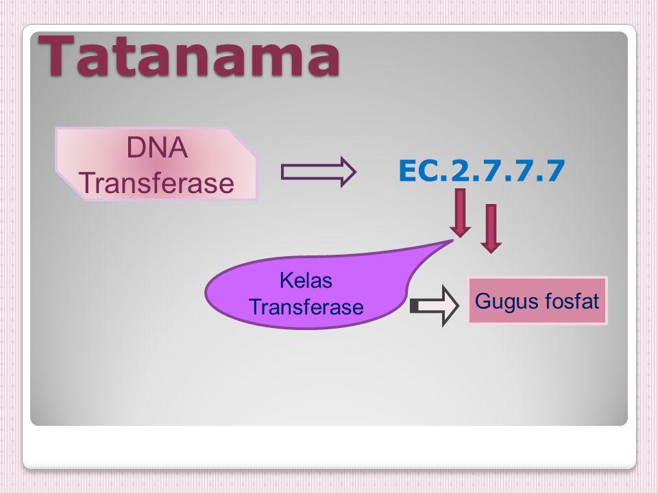 Tatanama DNA Transferase EC.2.7.7.7 Kelas Transferase Gugus fosfat