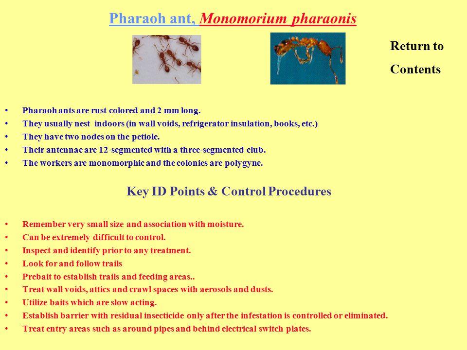 Pharaoh ant, Monomorium pharaonis