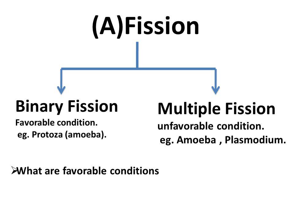 (A)Fission Binary Fission Multiple Fission unfavorable condition.