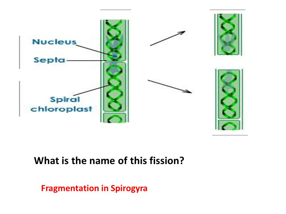 Lesson plan Science Class 10th Topic: Reproduction In ...
