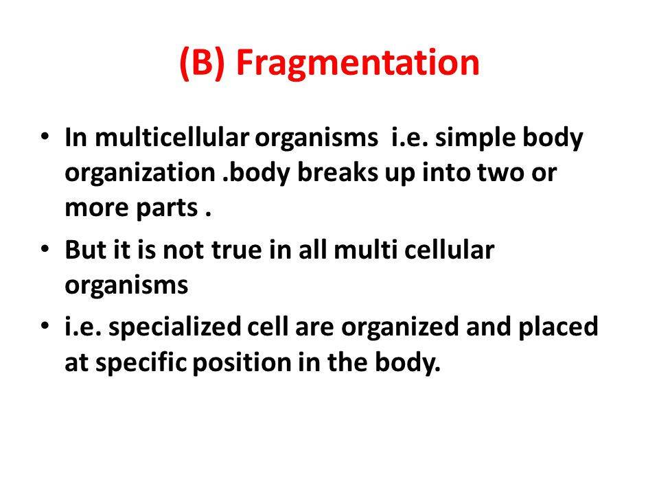 (B) Fragmentation In multicellular organisms i.e. simple body organization .body breaks up into two or more parts .
