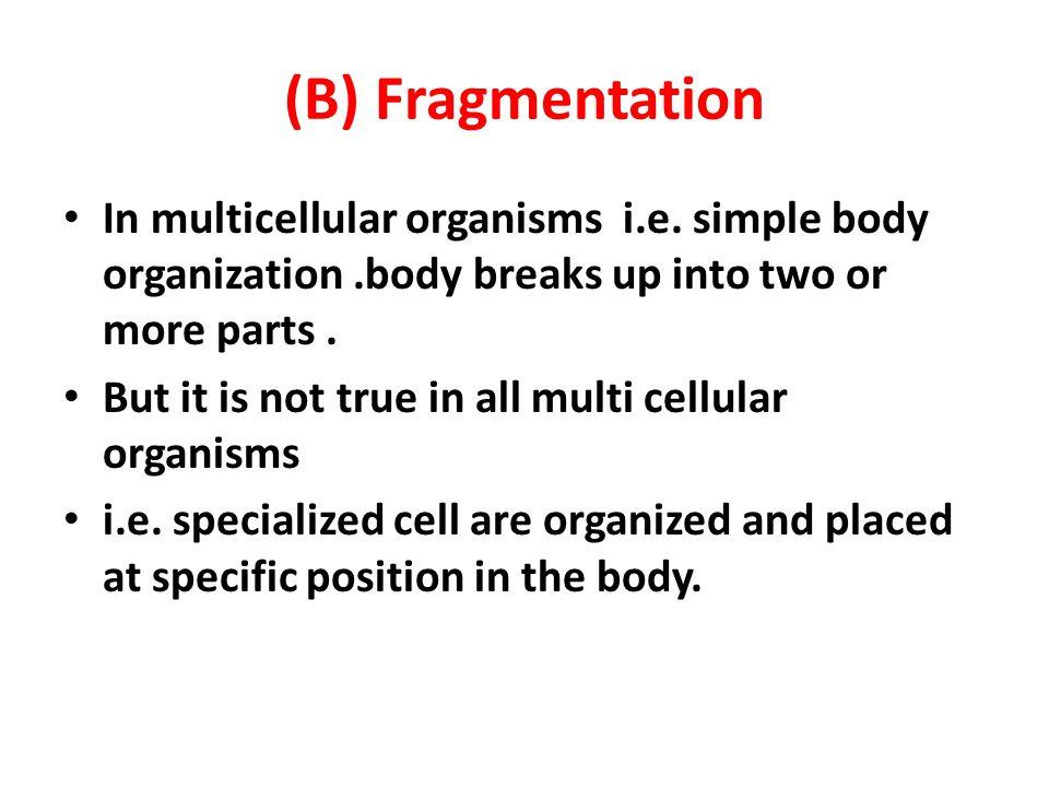 (B) Fragmentation In multicellular organisms i.e. simple body organization .body breaks up into