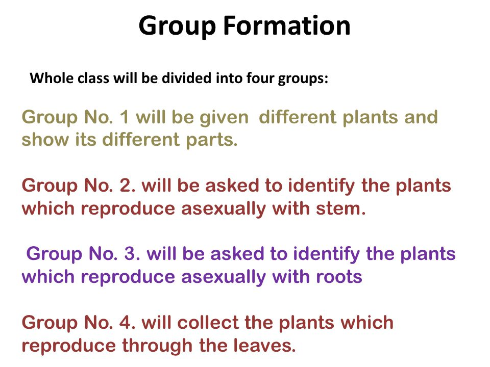 Group Formation Whole class will be divided into four groups: Group No. 1 will be given different plants and show its different parts.