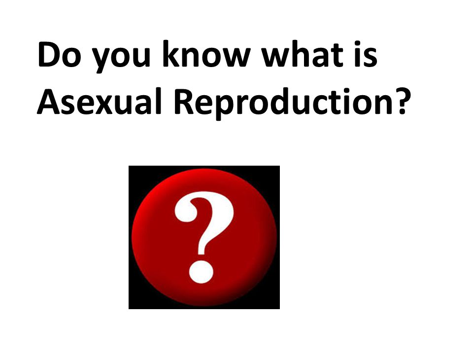 Do you know what is Asexual Reproduction