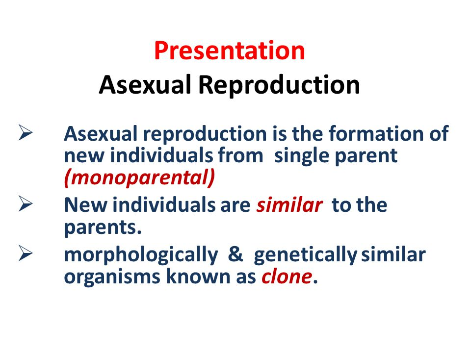 Presentation Asexual Reproduction