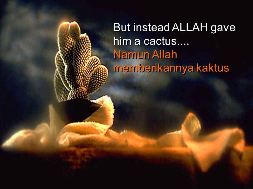 But instead ALLAH gave him a cactus....
