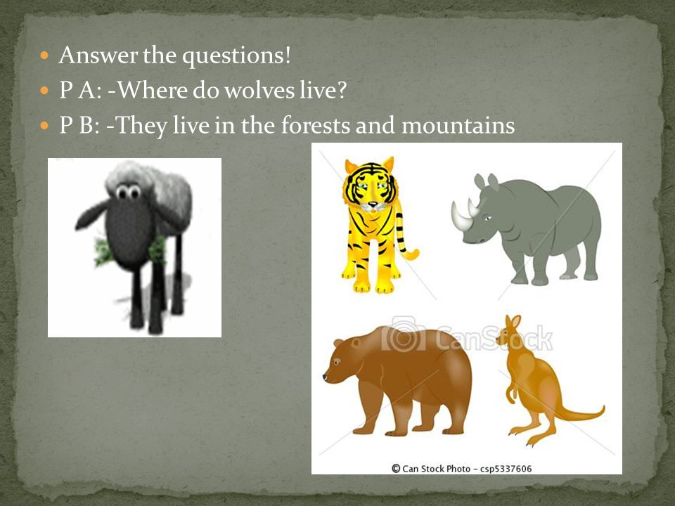 Answer the questions! P A: -Where do wolves live P B: -They live in the forests and mountains