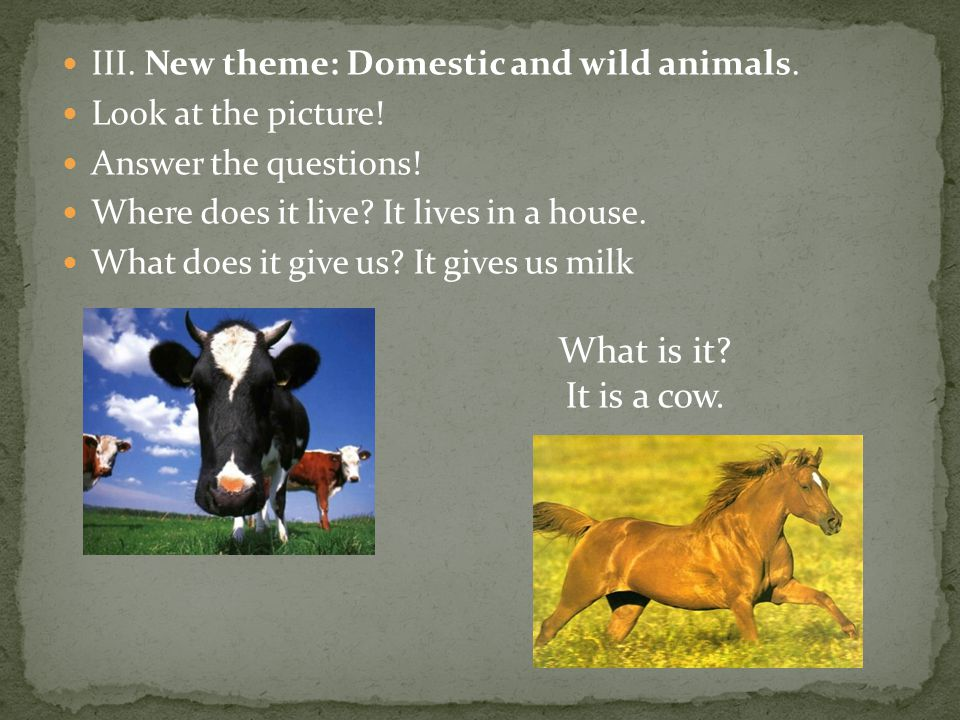 What is it It is a cow. III. New theme: Domestic and wild animals.