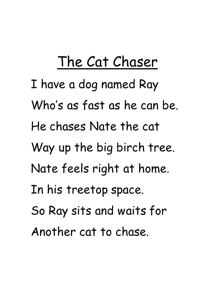 The Cat Chaser I have a dog named Ray Who's as fast as he can be.