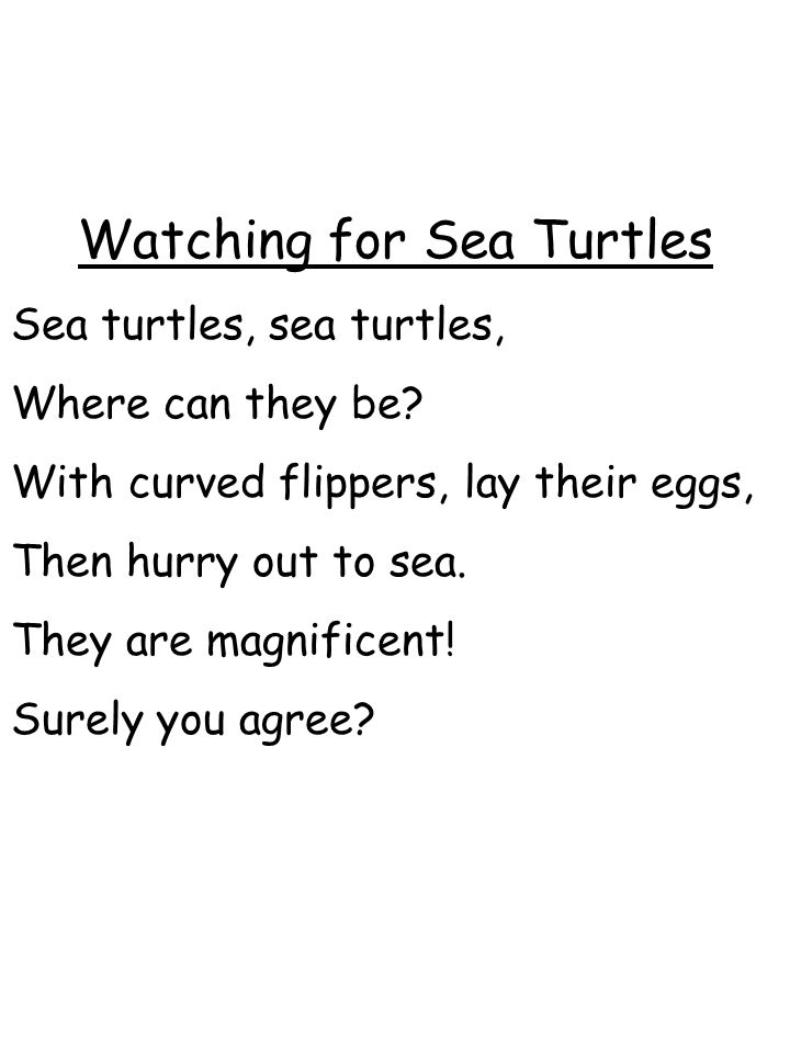 Watching for Sea Turtles