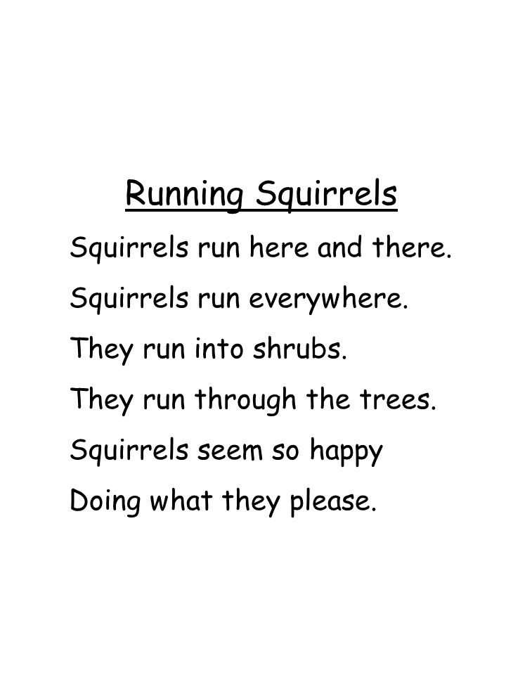 Running Squirrels Squirrels run here and there.