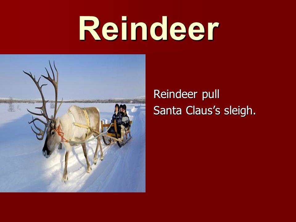 Reindeer pull Santa Claus's sleigh.