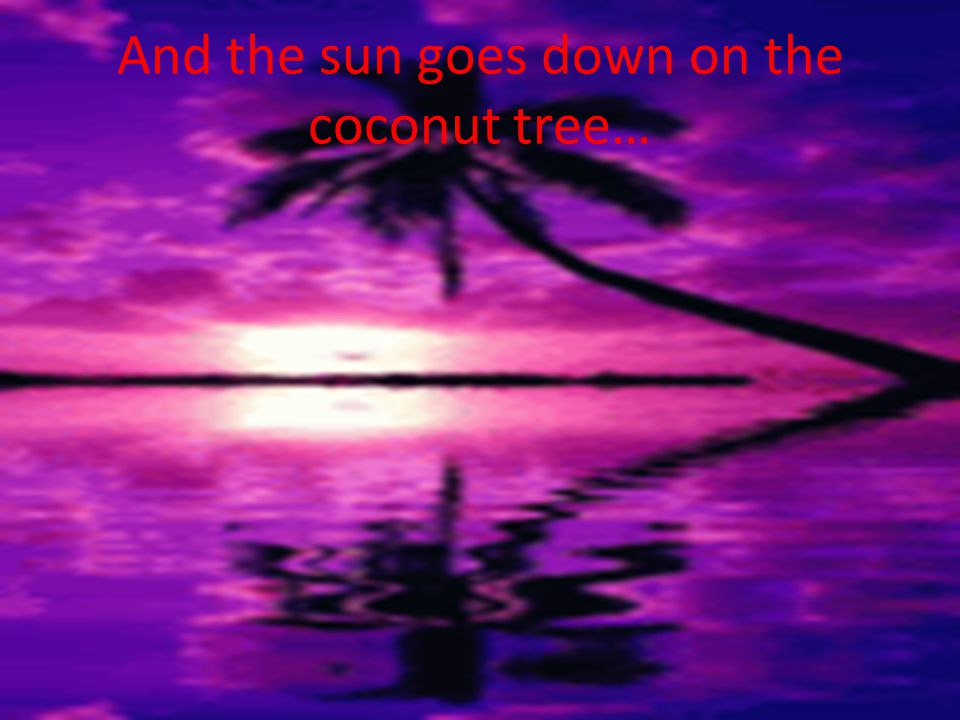 And the sun goes down on the coconut tree…