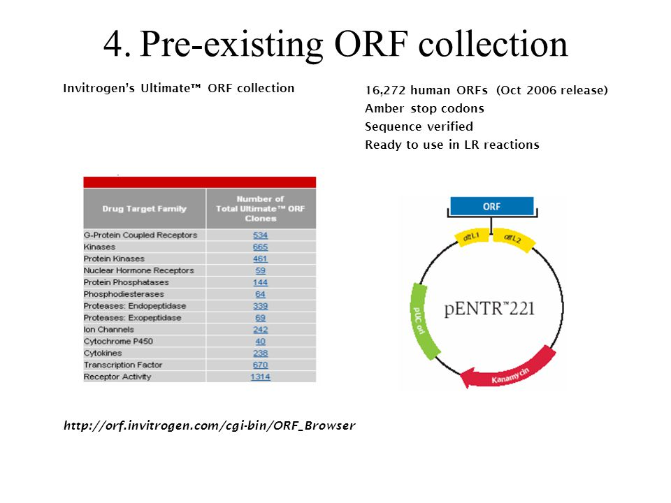 Pre-existing ORF collection