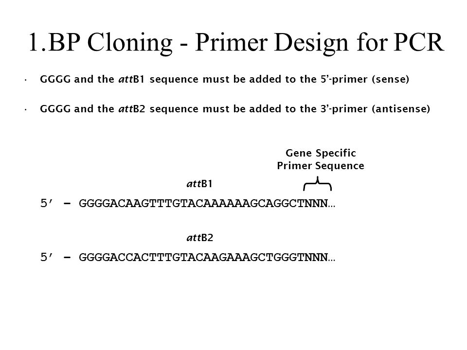 BP Cloning - Primer Design for PCR