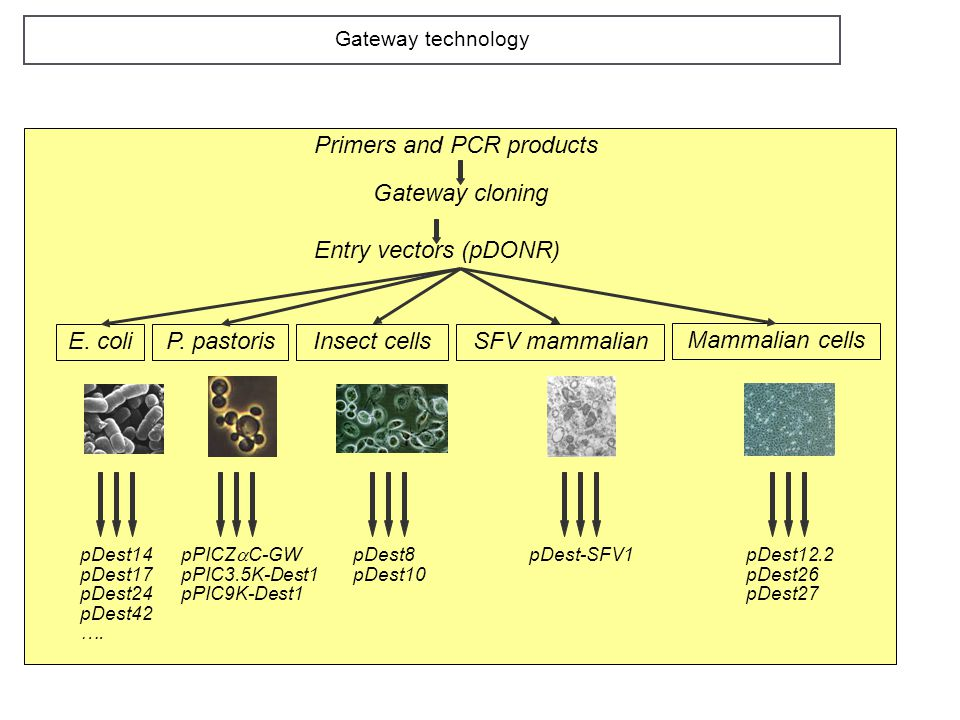 Primers and PCR products