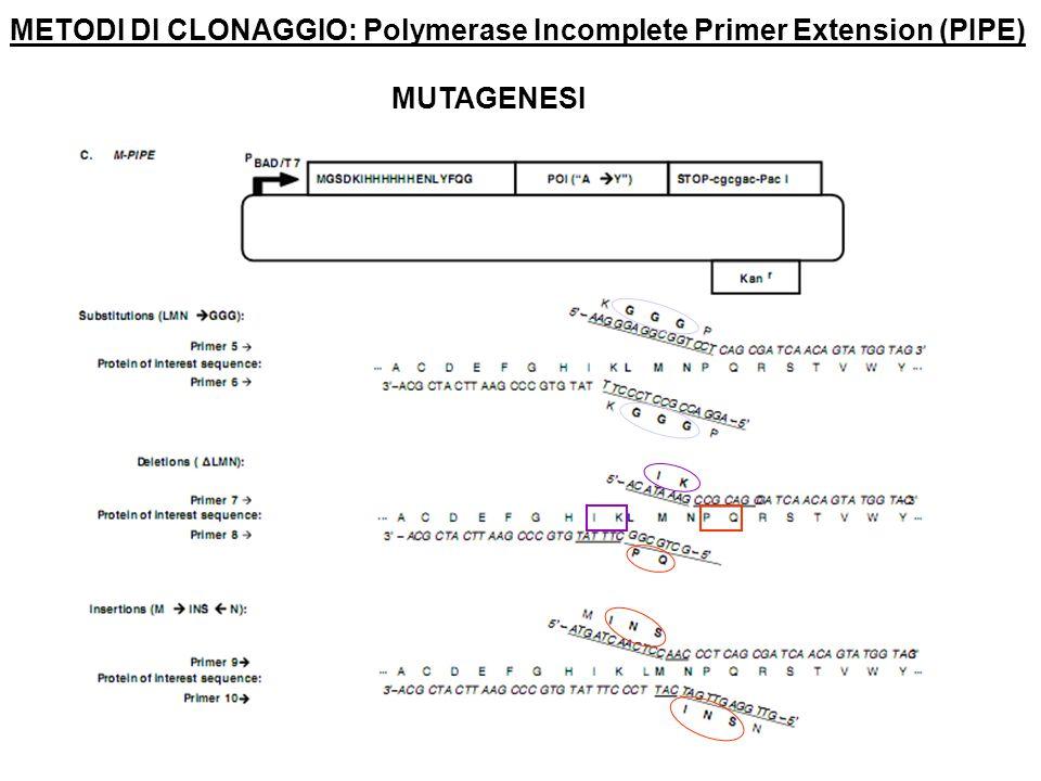 METODI DI CLONAGGIO: Polymerase Incomplete Primer Extension (PIPE)