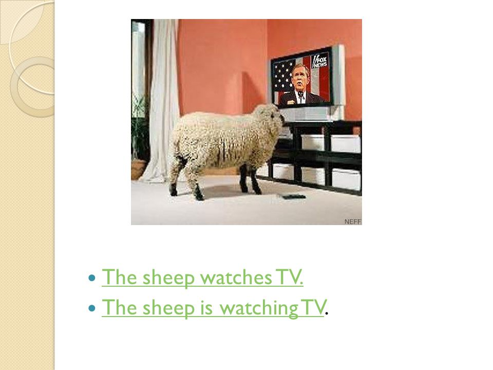 The sheep watches TV. The sheep is watching TV.