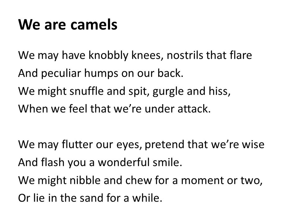 We are camels