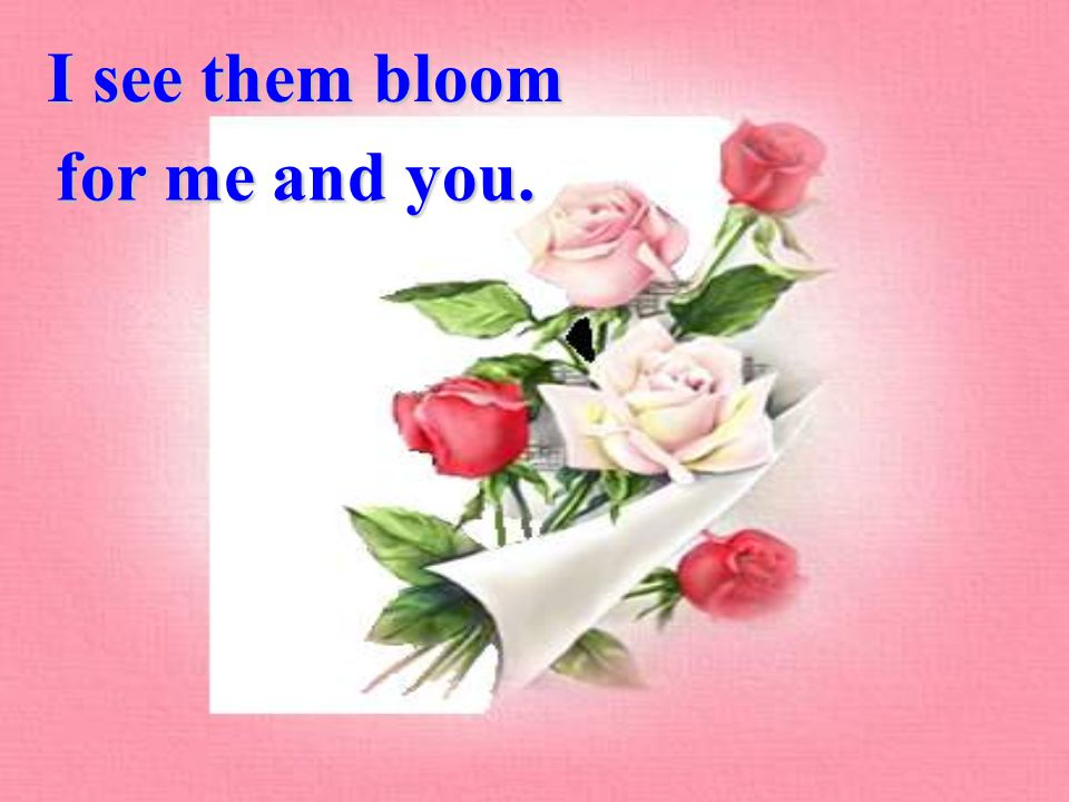 I see them bloom for me and you.