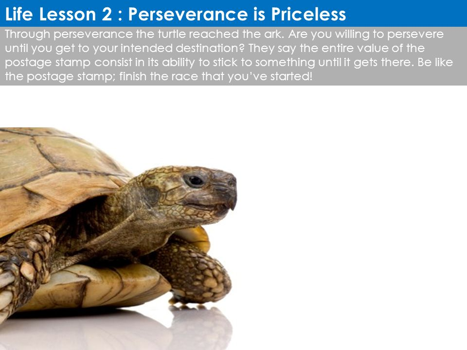Life Lesson 2 : Perseverance is Priceless