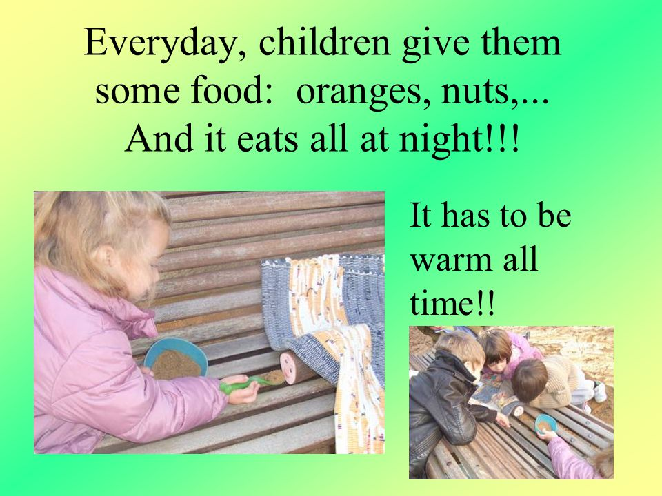 Everyday, children give them some food: oranges, nuts,