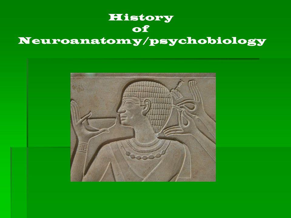 Neuroanatomy/psychobiology