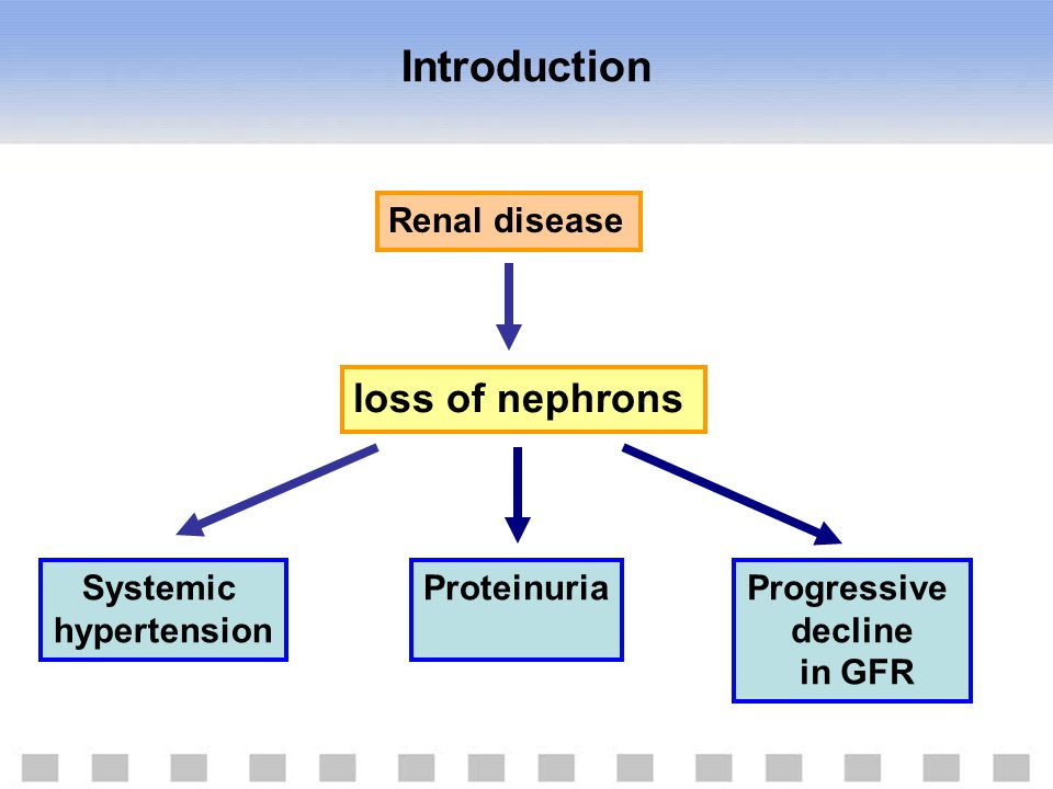 Introduction loss of nephrons Renal disease Systemic hypertension