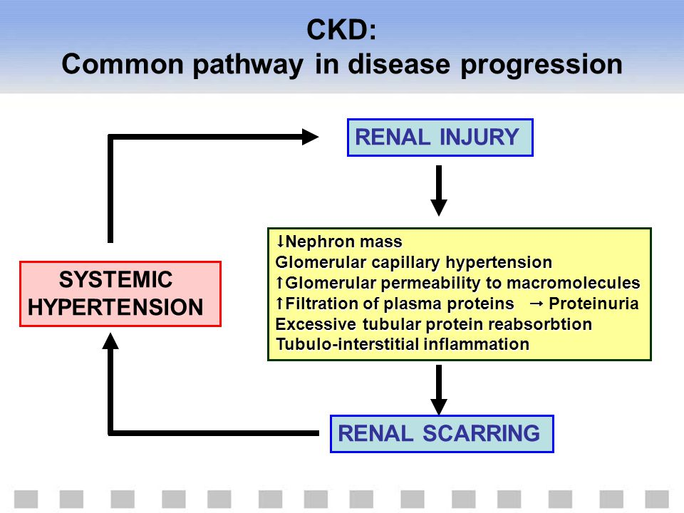 CKD: Common pathway in disease progression