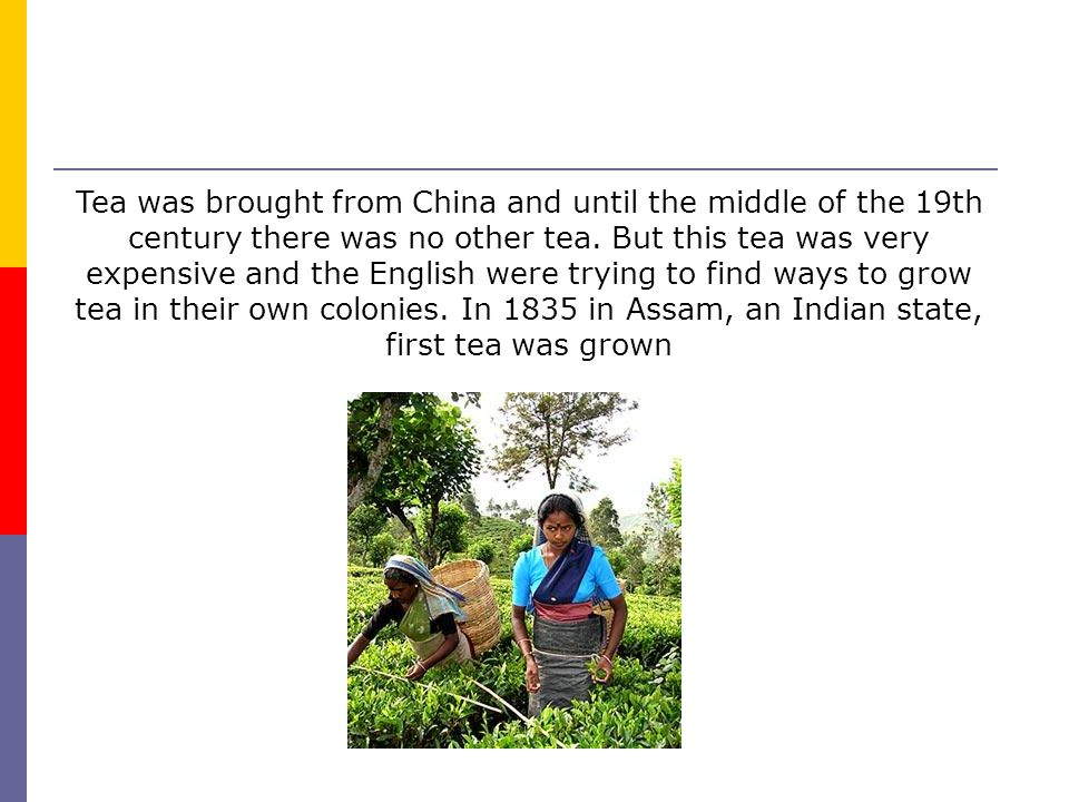 Tea was brought from China and until the middle of the 19th century there was no other tea.
