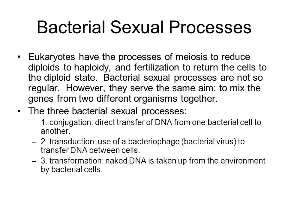 Bacterial Sexual Processes