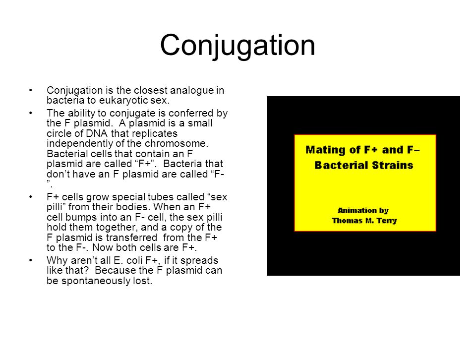 Conjugation Conjugation is the closest analogue in bacteria to eukaryotic sex.