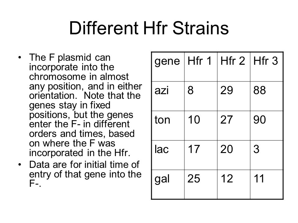 Different Hfr Strains gene Hfr 1 Hfr 2 Hfr 3 azi 8 29 88 ton 10 27 90