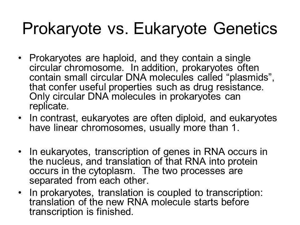 Prokaryote vs. Eukaryote Genetics