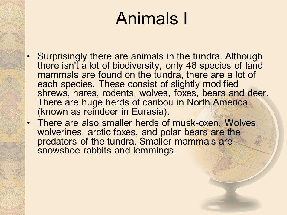 Animals I