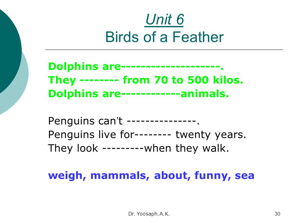 Unit 6 Birds of a Feather Dolphins are