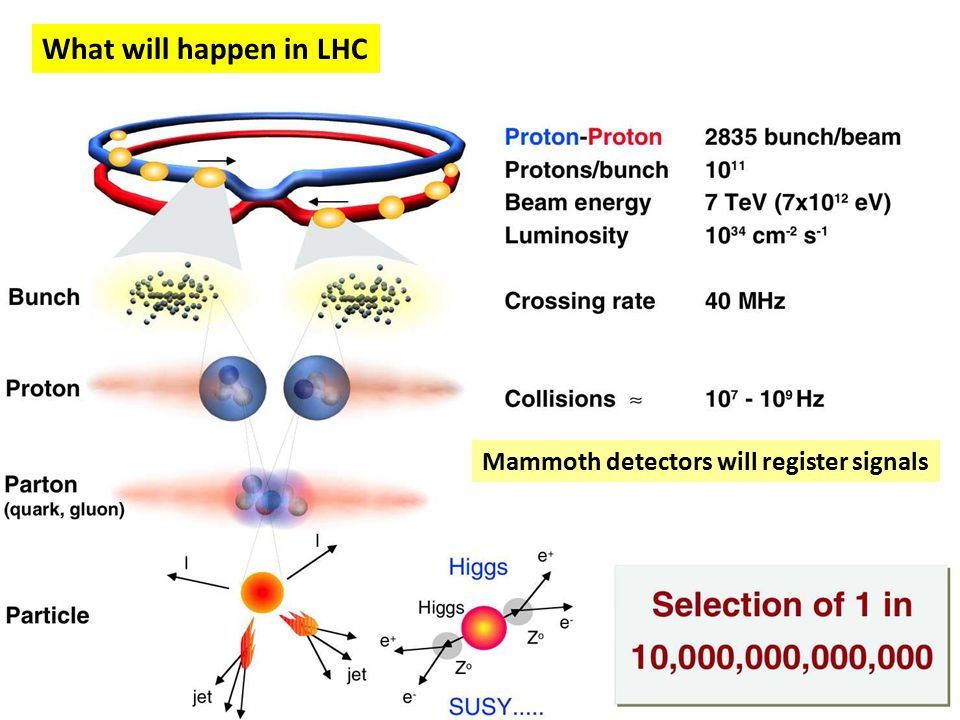 What will happen in LHC Mammoth detectors will register signals