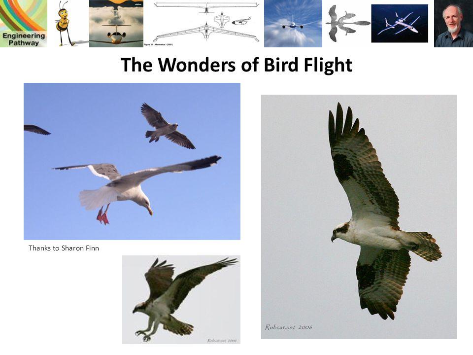 The Wonders of Bird Flight