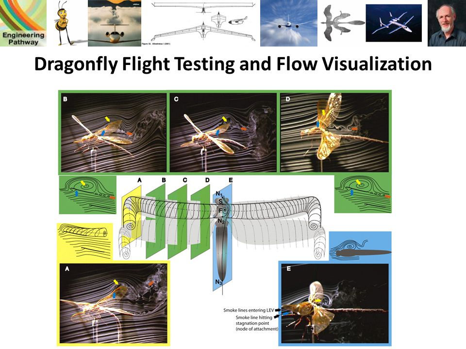 Dragonfly Flight Testing and Flow Visualization