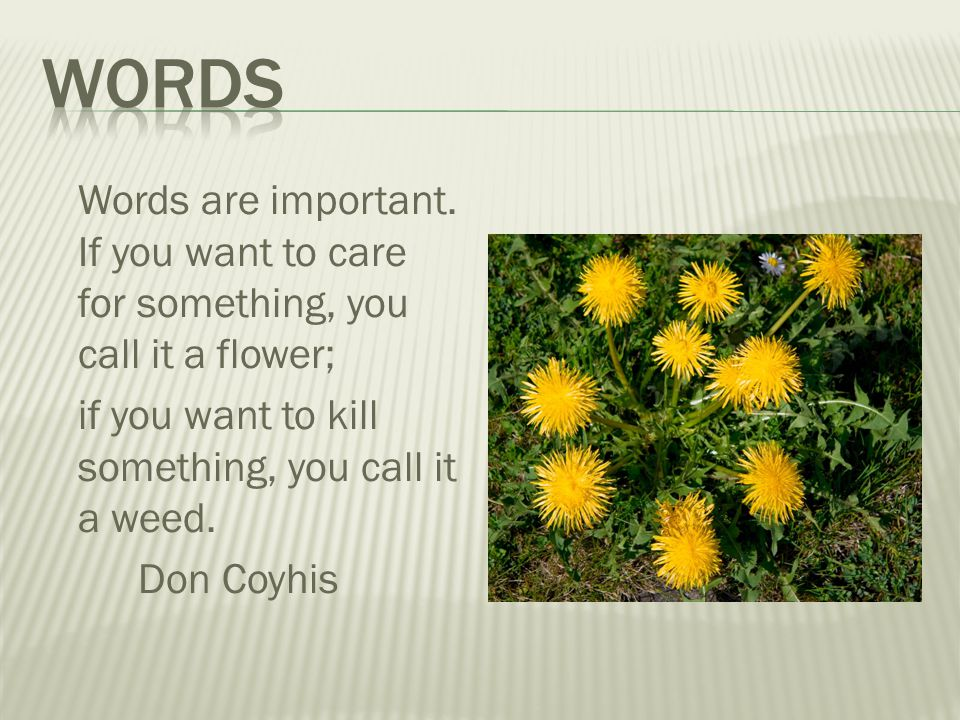 words Words are important. If you want to care for something, you call it a flower; if you want to kill something, you call it a weed.